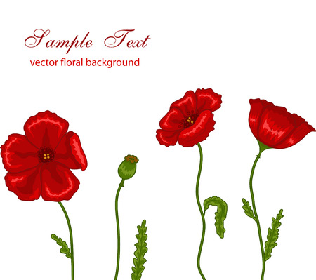 uncultivated: Vector illustration of red poppies on white background Illustration
