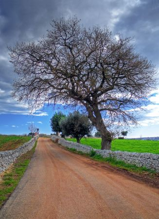 Landscape: This is a typical apulian country road. Stock Photo