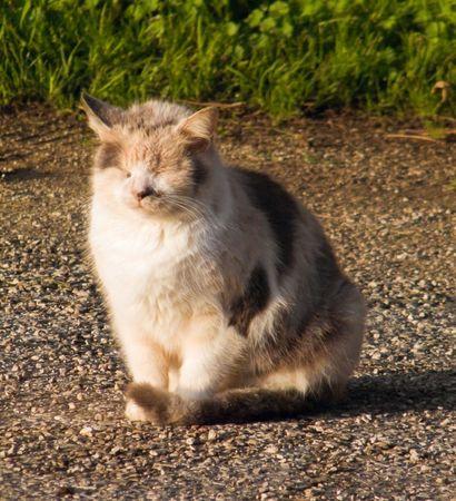 squinting: Squinting Cat.
