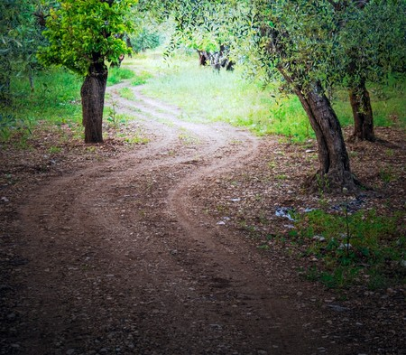 walking paths: Wooded Avenue. Stock Photo