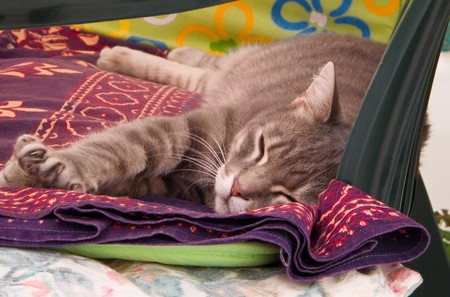 Dozing Cat. Stock Photo - 7090192