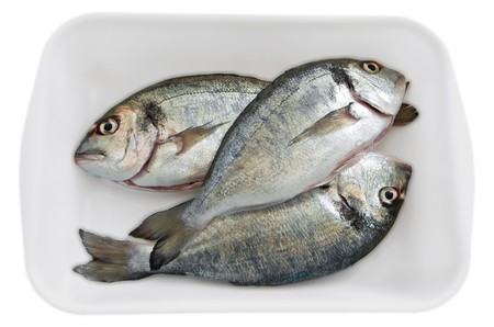 silver perch: Fresh fishes.