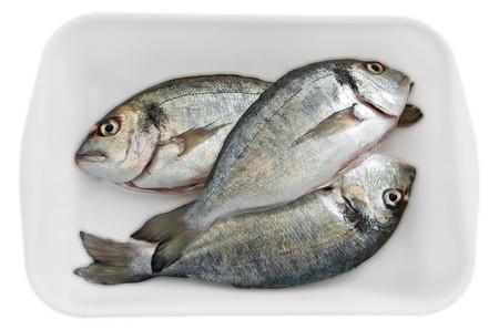 esteemed: Fresh fishes.