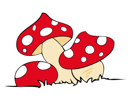 Funghi veleno rossi.