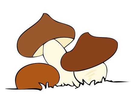 Edible mushrooms. Vector