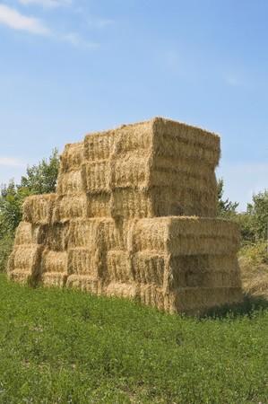 Bales of hay in rural setting. photo