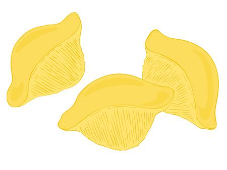 macaroni: Conchiglioni.