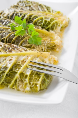 Savoy cabbage rolls on white dish  Stock Photo - 13104916