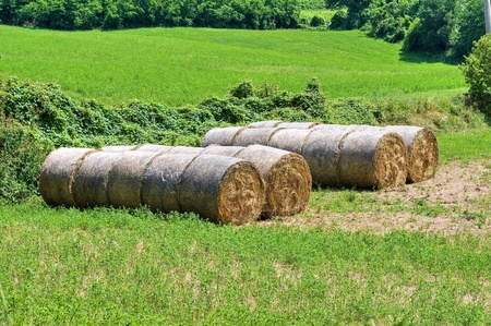 Hay bales. photo