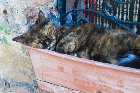 etrurian: Sleepy cat.  Stock Photo