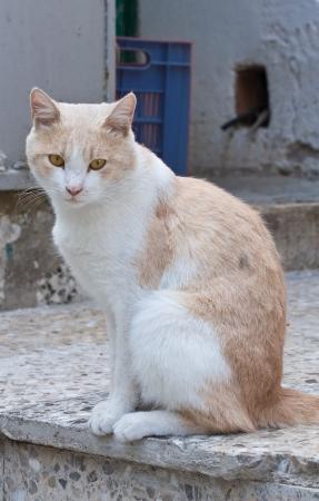 valsinni: Tabby cat on stair-step