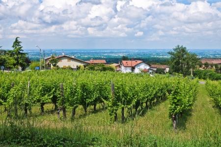 emilia: Vineyard. Stock Photo