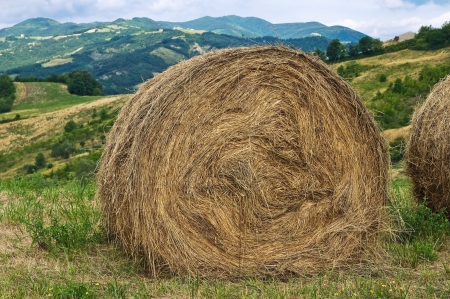 Hay bale field. photo