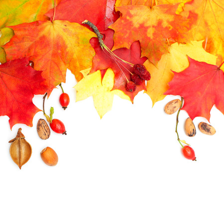 Autumn design background - colorful leaves Stock Photo
