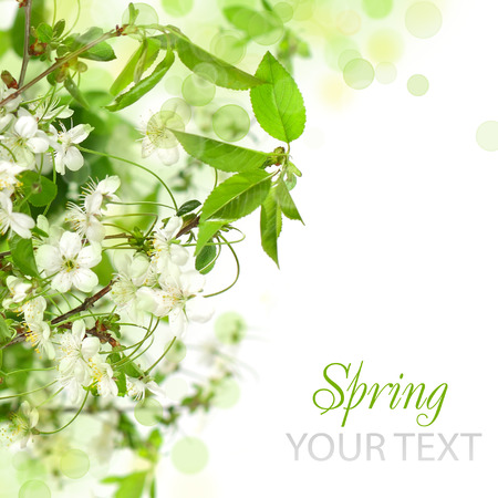 Spring blossom border - abstract floral background