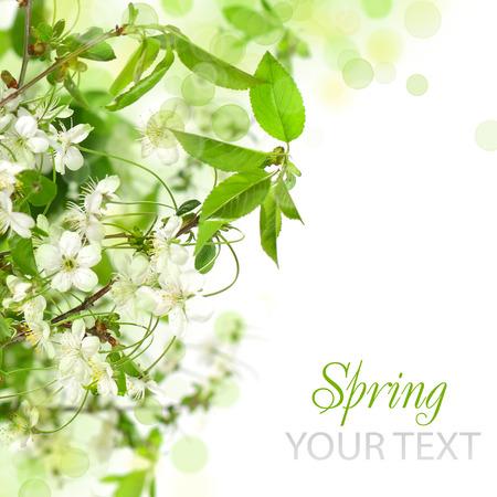 Spring blossom border - abstract floral background Zdjęcie Seryjne - 66690211