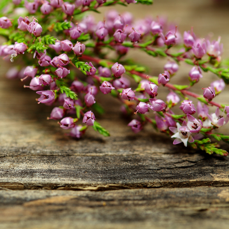 Rustic flower, macro -  blurred floral blossom background