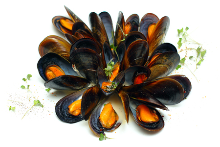 sauces: Mussels in wine sauces, gourmet food