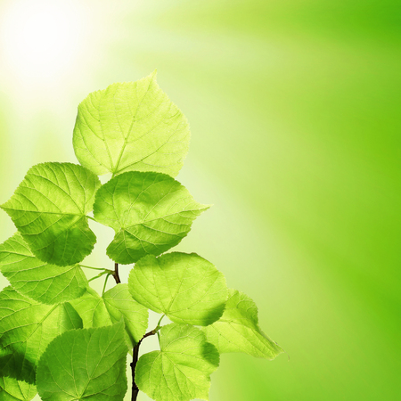 Spring Green Background with Green Leaves and Sunlight. Spring and Summer Background