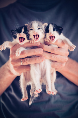 Male Hand with Cute Kittens Stock Photo