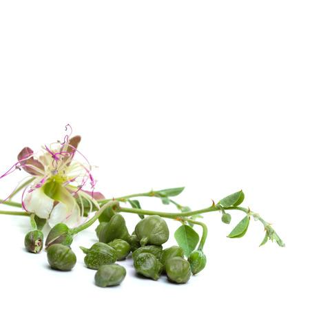 Rama de alcaparras, hojas verdes, brotes y flores. Alcaparra sobre fondo blanco.