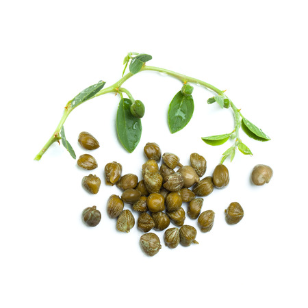 Capers with caper plant on white background