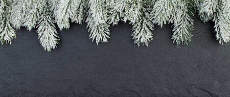 Green fir branch on black back background with copy space. Christmas composition border, flat lay top view