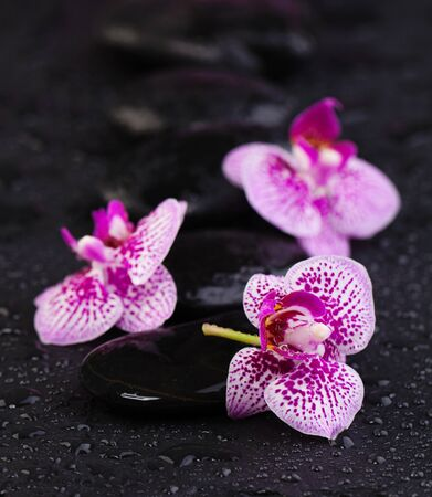 Spa beauty and massage concept. Natural orchids with zen stones