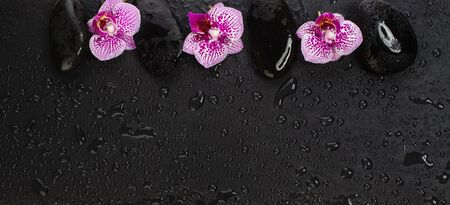 Massage stones and pink orchid flowers with water drops, spa and wellness concept