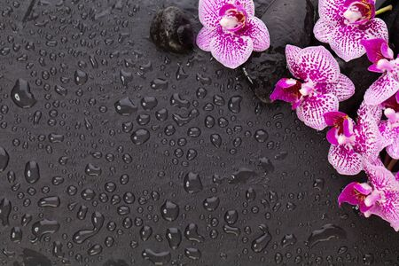 Asian beauty of nature. Orchid flowers and wet black stones, top view flat lay background 版權商用圖片 - 131958089