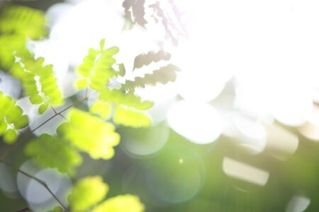 Summer blurred green background with foliage, sunlight and bokeh