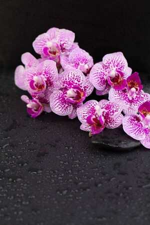 Wellness and spa concept with orchid flowers and black zen massage stones on wet background