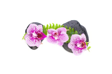 Spa concept. Pink orchid flowers, green leaves and wet zen massage stones isolated on white background