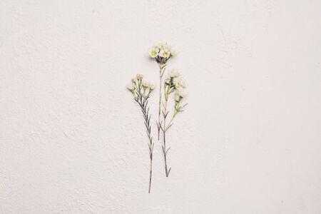 White flower on white color background, flat lay minimalism 版權商用圖片 - 137874478