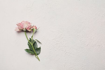 Floral background with delicate rose
