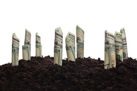 Successful financial strategy, profit, win-win and jackpot concept. American US dollars banknote growing out of the ground Zdjęcie Seryjne