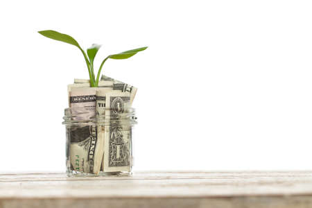 American dollars money with green growing up plant isolated on white background Zdjęcie Seryjne - 151482973