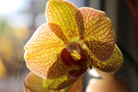 photo of a yellow orange orchid flower