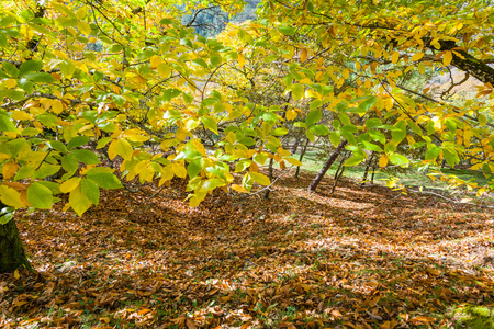 countryside landscape: Autumn landscape in countryside