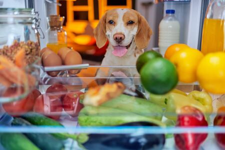 Dog stealing food from fridge. Picture taken from the iside of fridge.