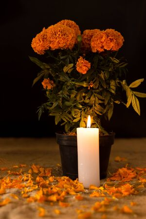 Day of the dead, cempasuchil flower in pot, in front of a lit candle, dark diffuse background