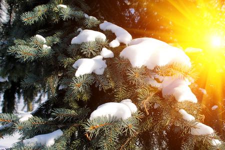 snowy winter sunset in the city, Europe, Belarus