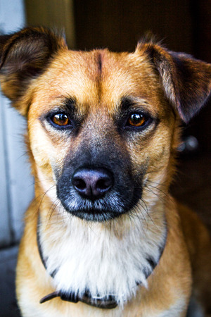 the street dog who is thrown out by owners