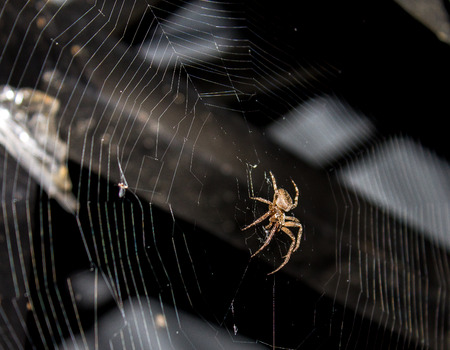 Spider on a web.Spider on the web at night