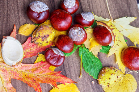 autumn still life, chestnuts close up, background Stock Photo
