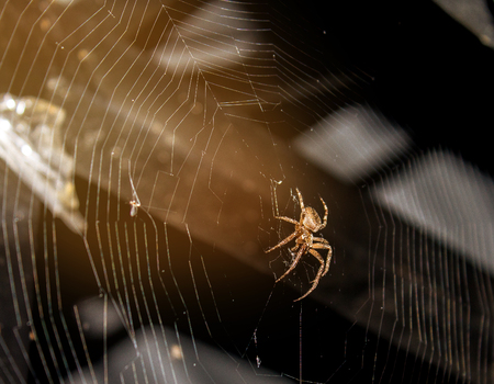 Spider weaves a web for hunting prey. Imagens