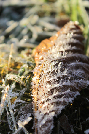 autumn leaf with Frost, close-up. Stock Photo