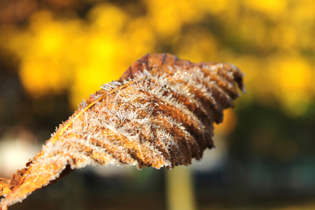 celebration: autumn leaf with Frost, close-up. Stock Photo