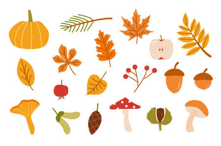 Autumn forest set. Collection of fallen leaves, fir cone, vegetables, berries, acorns, forest mushrooms isolated on white background. Colorful seasonal fall vector elements. Cartoon illustration. Ilustração