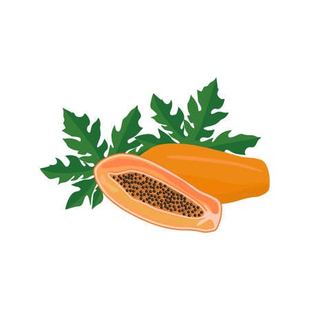 Ripe papaya cross section, half and whole exotic delicious fruit with black seeds and green leafs. Flat vector cartoon illustration isolated on white background
